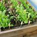 DIY Irrigation System
