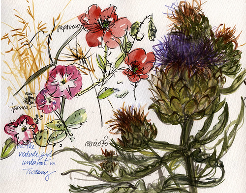 Tuscany sketchbook: plants | by laurelines