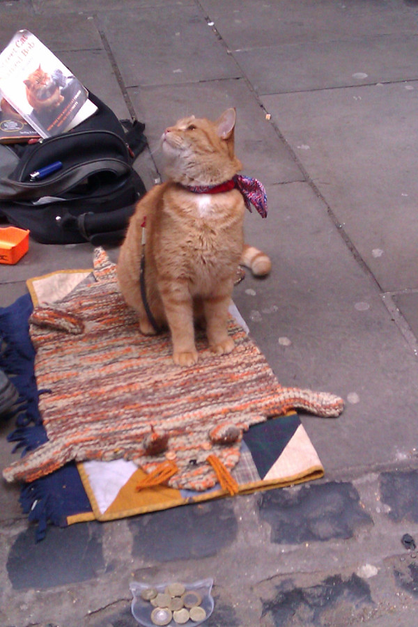 Street Cat Named Bob Book Tesco