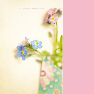 {Forget-me-Not} | by YAFEH photography