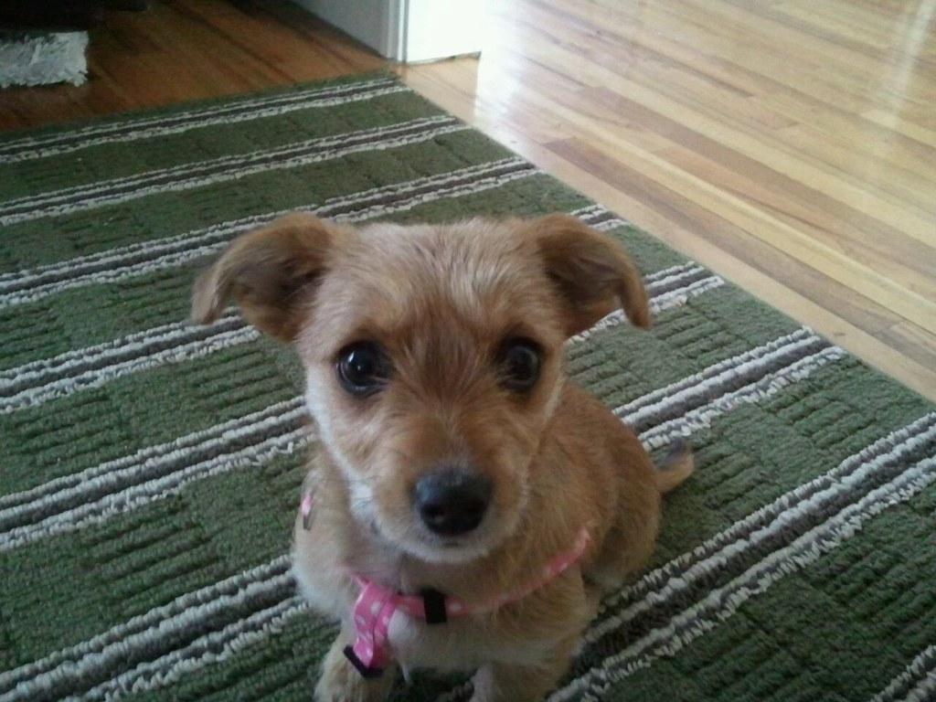 STELLA | Dachshund/Terrier Mix | — ADOPTED — Meet STELLA ...