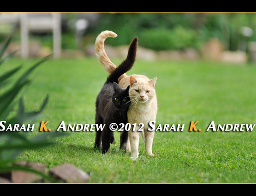 Official Camelot Kitty Greeting Committee | by Rock and Racehorses