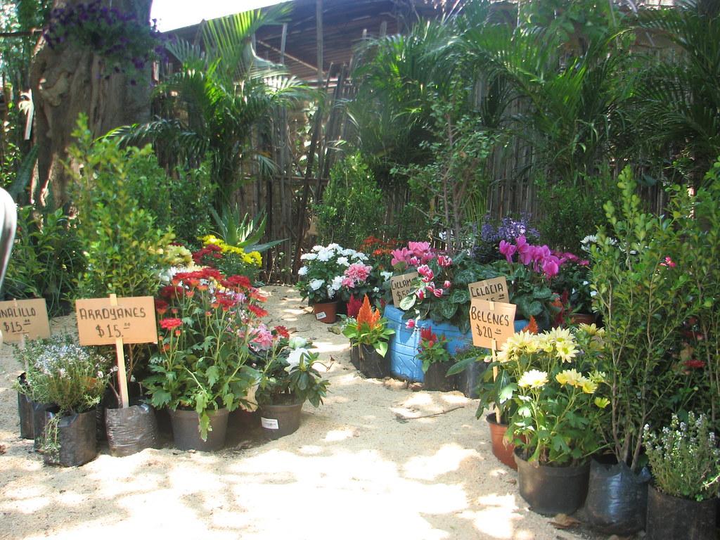 Flor de mayo oaxaca vivero 39 flor de mayo for Viveros en oaxaca