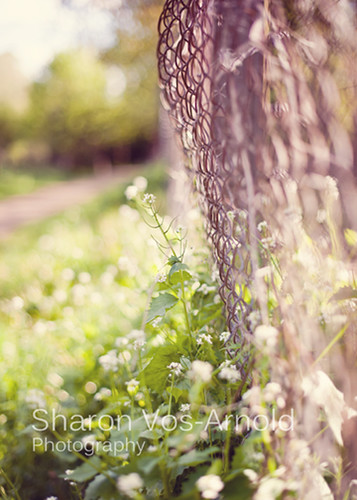 Happy Fence Friday ♥ | by ♥ Angel of light ♥