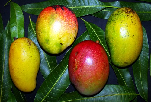 MANGO  #296: COMPARISON of 4 Varieties | by 3Point141