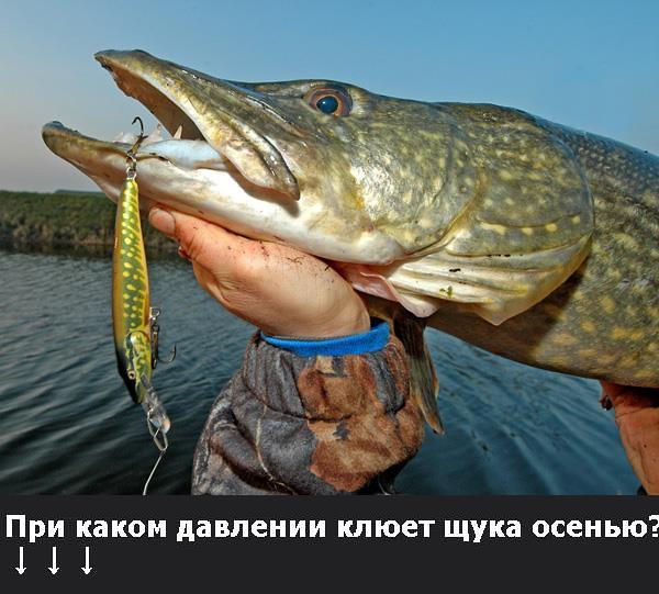 при каком ветре не клюет рыба карась