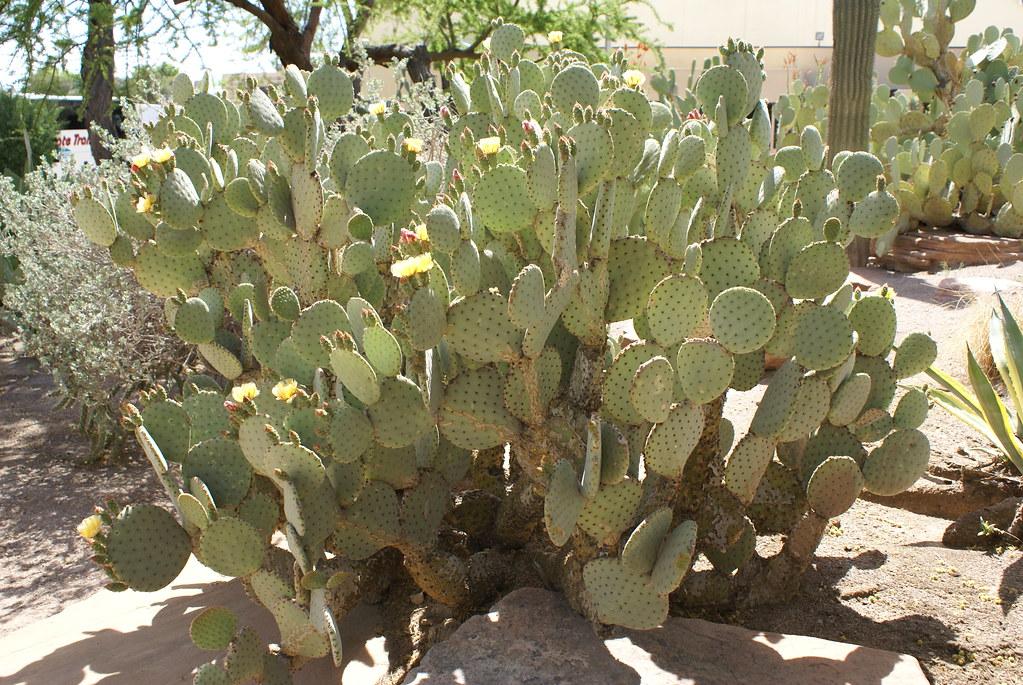 Ethel M Botanical Cactus Garden Ethel M Botanical Cactus G Flickr