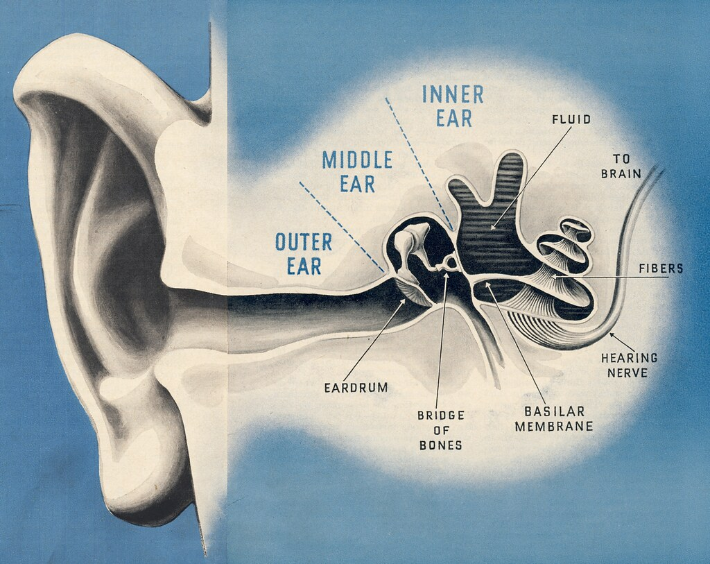 how to clean inside ears