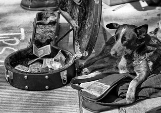 Money Guard Dog | by Darren Sethe