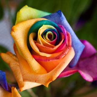 Photo credit: Rainbow Rose by Sam Judson, on Flickr.