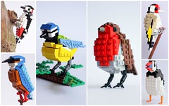 British Bird Series