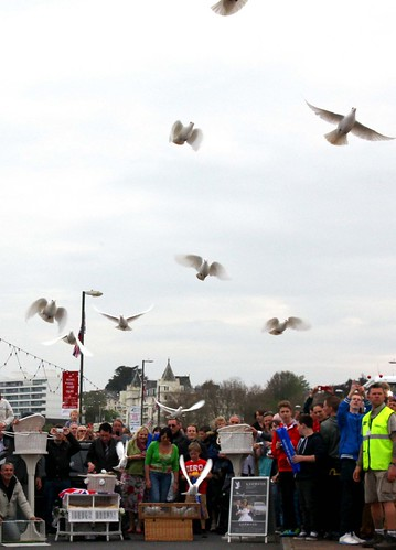 The doves being released | by Torbay Council