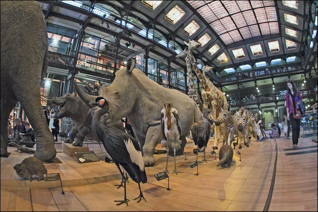Museum National D'histoire Naturelle Paris France Muséum National D'histoire