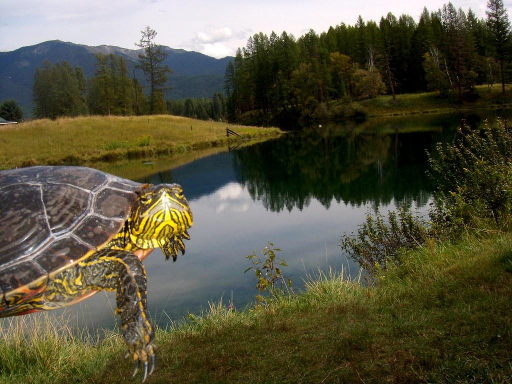 Pondzie the turtle loves creston national fish hatchery for Fish hatchery jobs