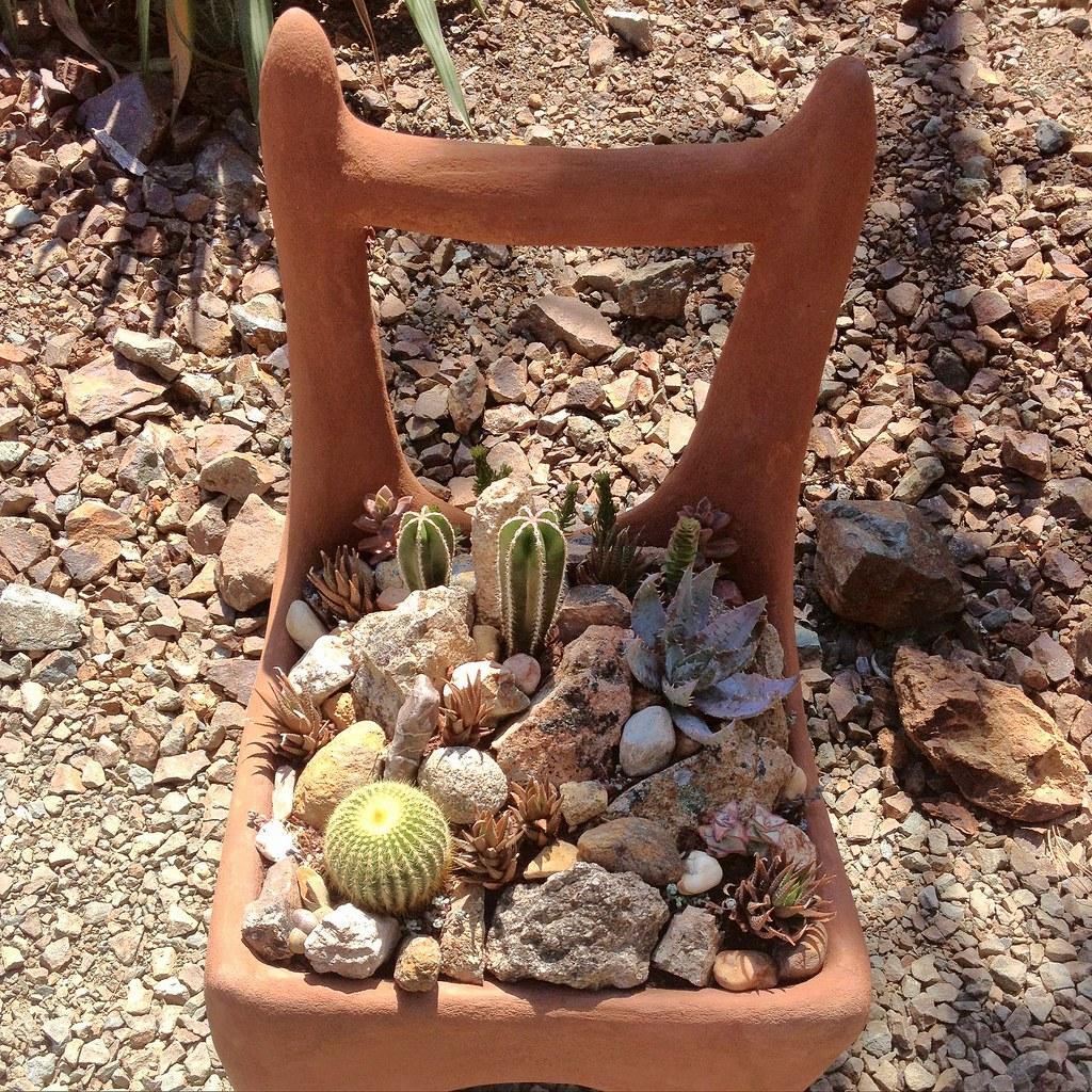 Chair garden the ruth bancroft garden flickr - Composiciones de cactus ...