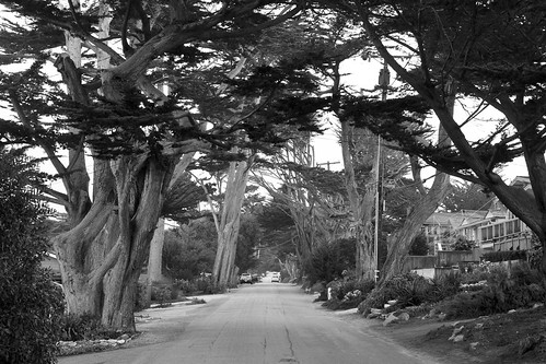 Carmel by the Sea | by evelina ander