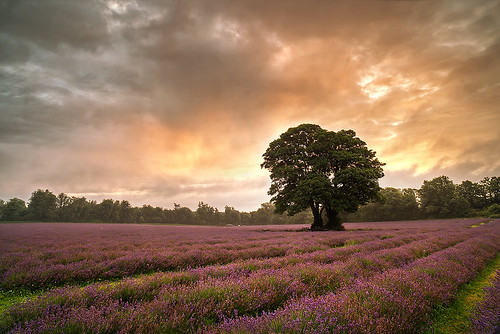 Lavender Skies | by Tired but Willin