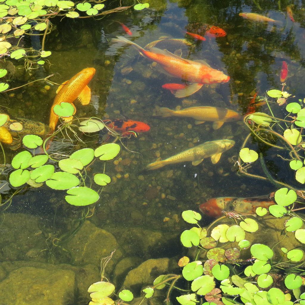 Cool fish pond at dr office this is a pretty good size for Cool fish ponds