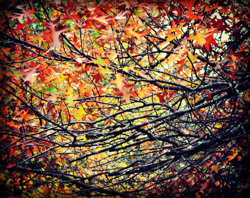 Autumn leaves & branches | by ZolenZ Photography