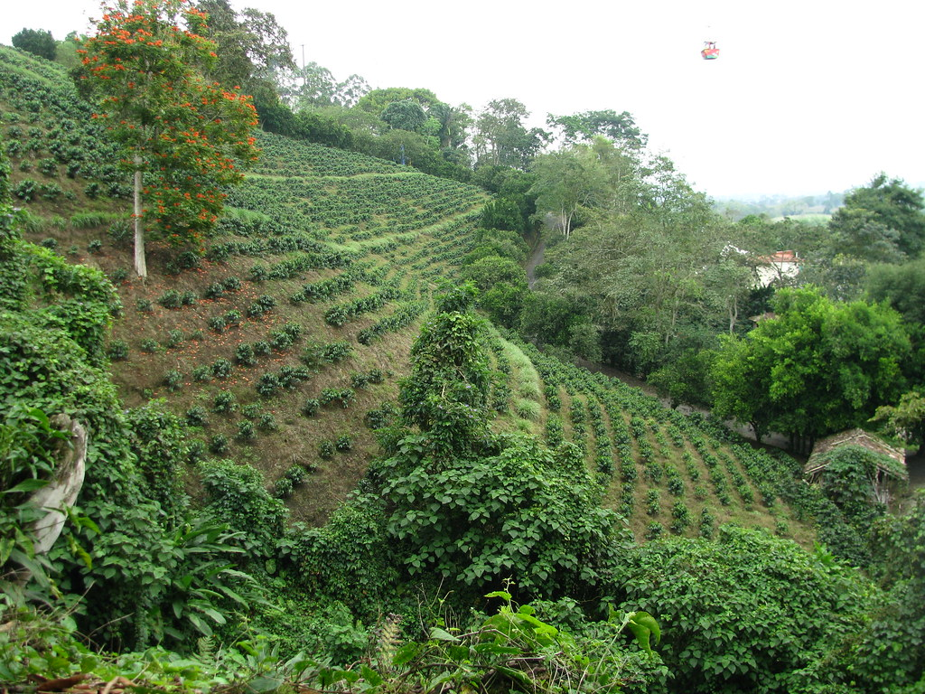 Imagen de la Zona Rural de Montenegro, Quindio.