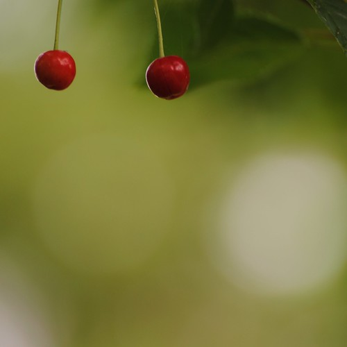 two cherries dangling | by call me boots