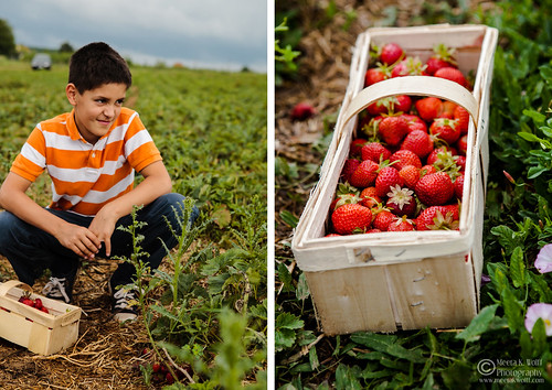 Diptych Strawberry Fields 3 | by Meeta Wolff @ What's For Lunch, Honey?