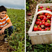 Diptych Strawberry Fields 3