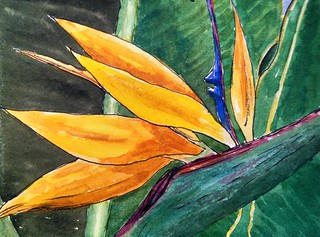 Bird of Paradise watercolor 4x5 in | by c.huller