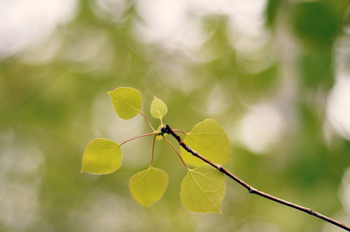 twinkle leaves | by mrs. french