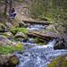 Mountain Stream - Santa Fe National Forest