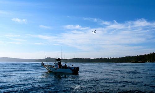 Langara island lodge salmon fishing world famous sport for Langara fishing lodge