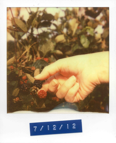 Adopted Berry Bush | by Caleb Jenkins