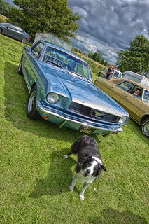 Bonny dog likes the Mustang. | by PTG PHOTO.