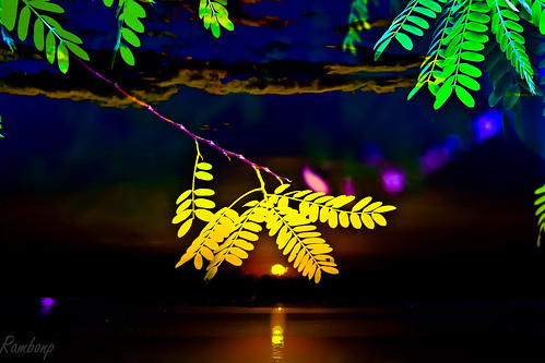 Sunset n Leaves !!! | by Rambonp:loves all creatures of this universe.