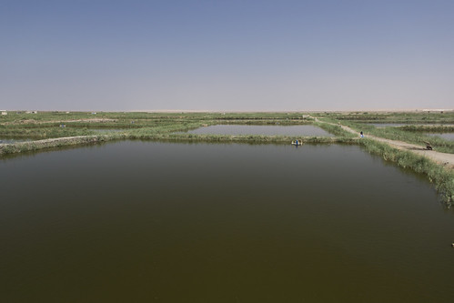 Large scale aquaculture farm, Faiyum, Egypt. Photo by Samuel Stacey, 2012. | by WorldFish