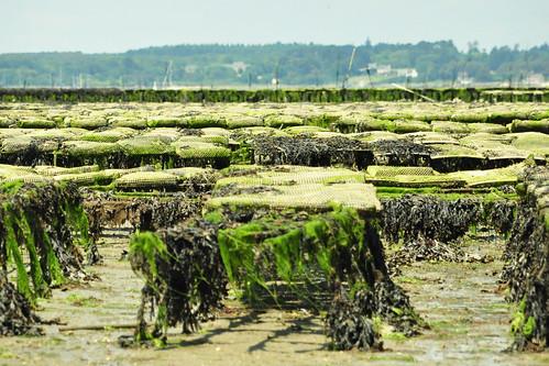 Bretagne - Golfe du Morbihan - Überfahrt Locmariaquer - Port Navalo - Foto: Brigitte Stolle 2016