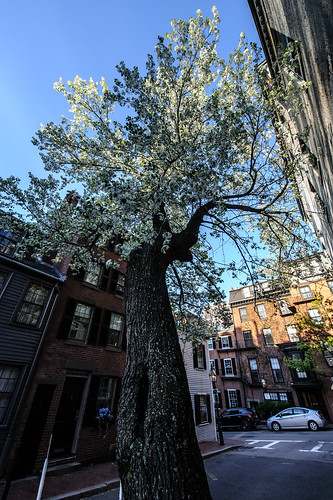 Beacon Hill Bloom | by Shutterscript