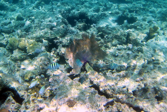 Snorkeling, Sapphire Beach, St. Thomas, US Virgin Islands ...