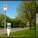 Urban Plant Tag: No Parking Sign