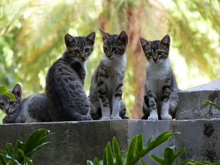 Gatitos posando!!! ( Explore ) | by Rayo De SoL !