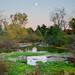Arboretum fall moon 10-22-2011 052