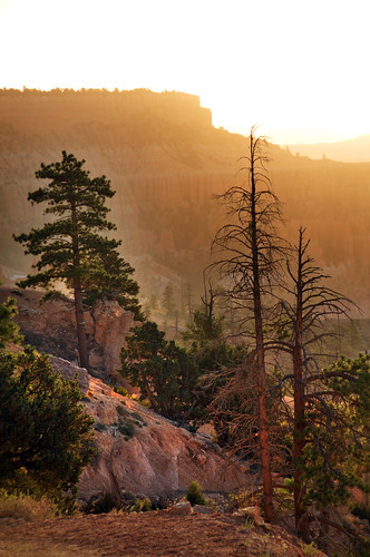 trees at bryce canyon area | by houstonryan