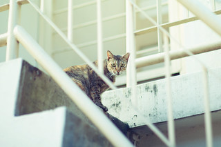 Staircase Neko | by Jon Siegel