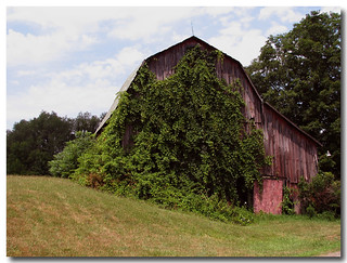 Vine Covered Barn | by David k. Sturges