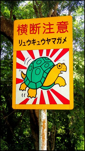 WATCH OUT FOR RARE AND ENDANGERED TURTLES CROSSING THE ROAD -- Especially CUTE ONES ! | by Okinawa Soba (Rob)