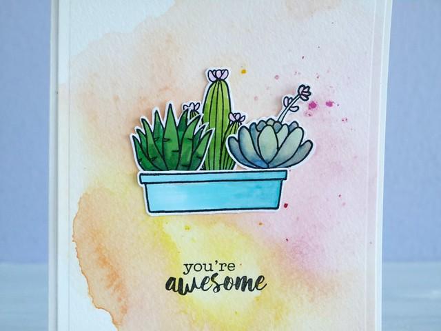 Cactus 2/2