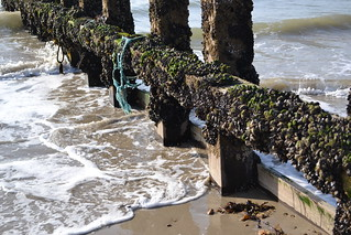 Seaweed at Shoreham March 2012 | by jennyb44