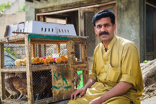 Living by selling Poultry | by masroor saleem