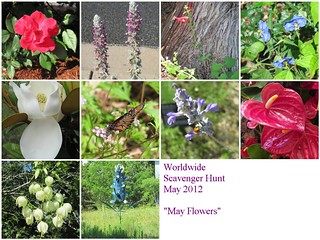 May WSH Mosaic | by RieFlections