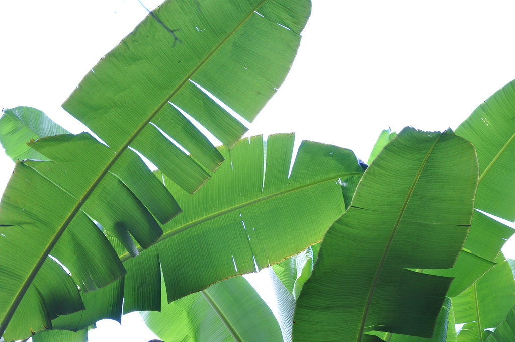 Tropical Plant Leaves Tropical Leaves by